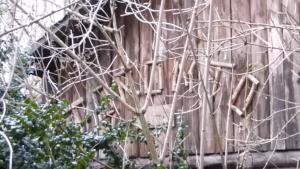 screenshot_2019-01-17-soumrak-nad-osadou-toronto-aneb-opusteny-srub-bratri-nedvedu---youtube-1-.png